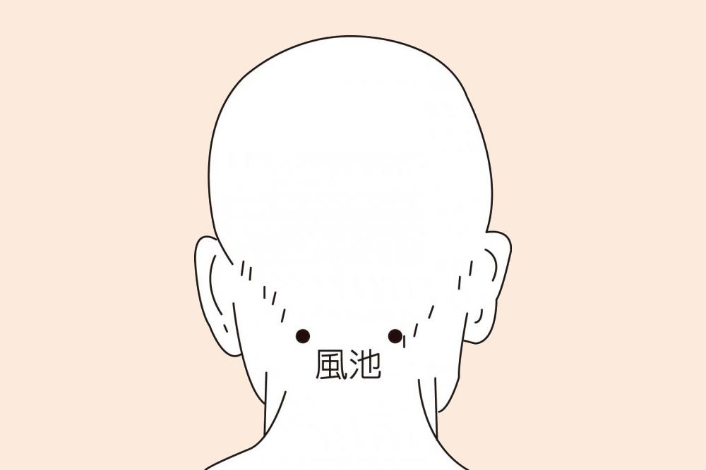 經常按摩風池穴,可以舒緩後頸肌肉,緩解眼睛酸痛。(溫嬪容中醫生提供)