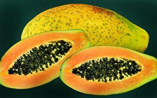 种植木瓜遇黑斑病 园艺师教防治方法