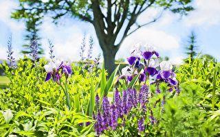 打造花香四溢的亞熱帶花園