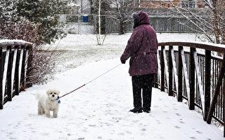 本週末 多倫多降雪15厘米 體感-28℃
