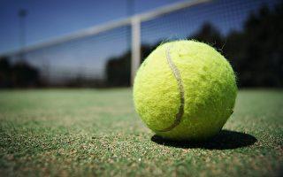 后院栅栏变网球场 墨尔本一社区邻里更和睦