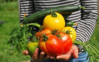 夏季園藝指南:如何在家中創建有機菜園