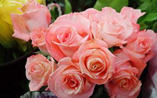 情人节献花表心意 花语暗藏甜蜜爱意