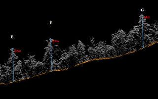 寻访中央山脉里的巨木 空拍台湾杉美极了