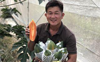 重视家庭返乡务农 陈文亿用木瓜养家