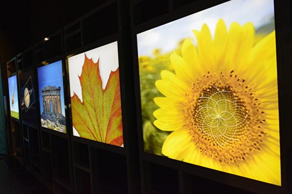 温哥华科学馆举办《镜子迷宫》展览,展现大自然中的奇妙数学现象。