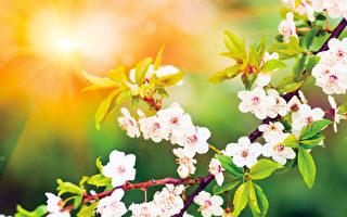 【花意诗心】梅之花  高洁如雪香自清