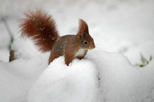 组图:奥地利摄影师拍小动物 喜感十足