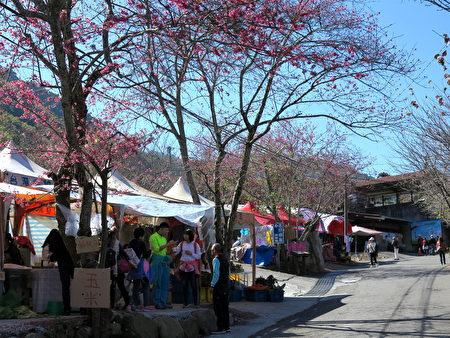 草坪头茶园樱花树下,贩卖农特产的摊贩。
