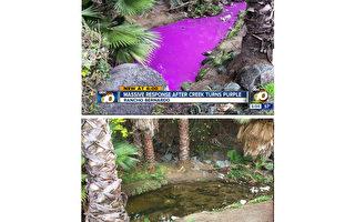 聖地亞哥北郡小溪變紫色 政府快速清理