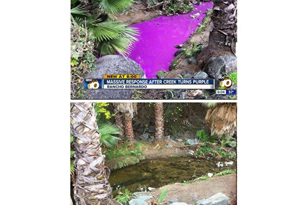 圣地亚哥北郡小溪变紫色 政府快速清理