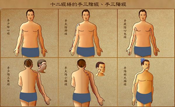 十二经络中的手三阴经(肺、心包、心)和手三阳经(大肠、三焦、小肠)。