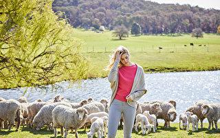 Merino&Co澳洲羊毛製品 世界羊毛中的珍品