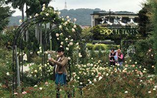 「春季玫瑰展」好療癒  台北玫瑰園奇幻之旅登場