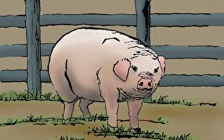 一邊是豬身 一邊是蛇身  于生銘記三生