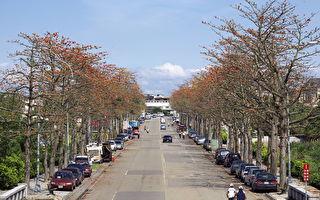 拜訪春天 中大木棉花大展英姿踏青郊遊