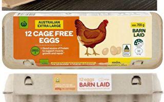 维州农场病鸡感染沙门氏菌 全澳洲召回鸡蛋