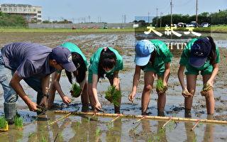 小學生校外教學 在明道大學體驗一日農夫