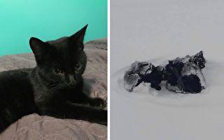 配送員見1尺深雪中「有件黑外套」 直覺讓他救下3隻幼貓