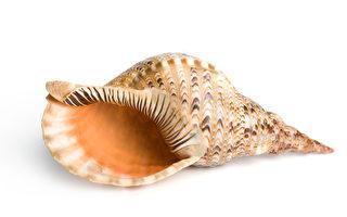 組圖:加勒比海美麗島嶼 由無數海螺堆成
