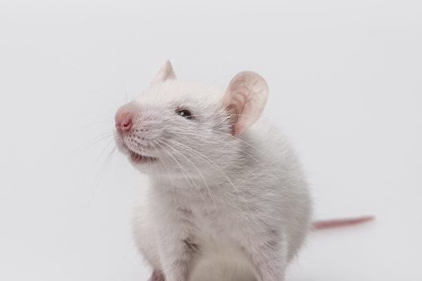 善心老鼠偷偷帮英老翁清理桌子 镜头全都录