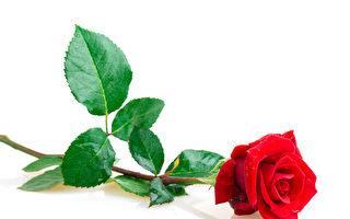 大自然的签名? 美地震在沙子上画出玫瑰花