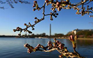 美東海岸週六喜迎春 週日復還冬 溫差40度