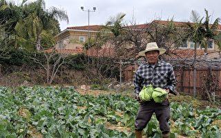 後院拔蘿蔔 體驗城市農村樂
