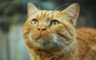 消防队员出任务!拯救卡在室外机的姜黄猫