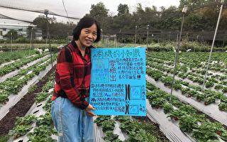 228連假何處去 有機農場採草莓