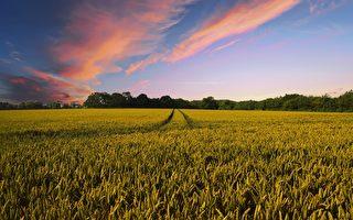 維州政府制定新法 保護墨爾本城郊農業用地