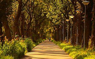 墨爾本西區種植100萬棵樹 環境改觀