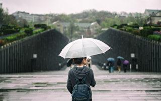 多伦多本周末春雨绵绵