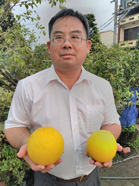 历经10年育种 兄弟种出2台斤黄金果