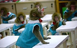 猴脑变人脑?中共转基因实验被批无法无天