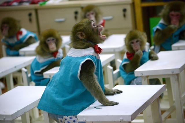 猴腦變人腦?中共基因改造實驗被批無法無天