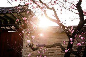 【文史】日本「令和」出典深染蘭亭集序情懷