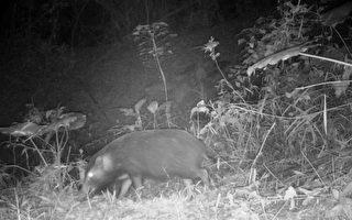里山倡議友善耕作 野生動物現蹤