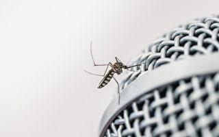 用电子音乐驱蚊?不是愚人节玩笑