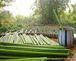 他用蒲草做吸管风靡越南 天然环保还能洁牙