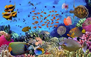 日本水族馆厕所 让你一边如厕一边看鱼