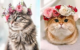 猫狗头戴教授制作的花冠 华贵模样令人惊艳
