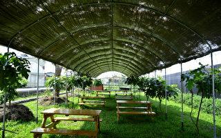 埔里親子知識教育之旅──大雪山、可麗農場