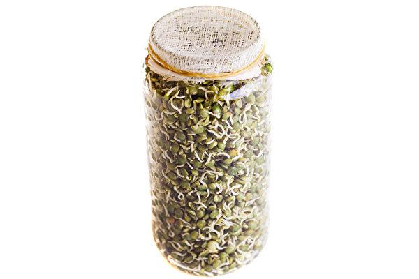 扁豆芽可以养护神经,而且是完全蛋白质的重要素食来源。(Shutterstock)