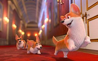 《女王的柯基》影评:柯基犬除了可爱外表 也有贵族气魄