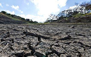 維州吉普斯蘭地區旱災持續 農民請求援助