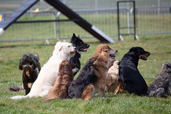 愿意投注心力守护老年动物,真是令人敬佩。示意图。(Shutterstock)