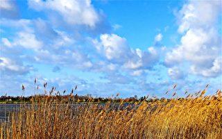維州旱情嚴重 墨爾本儲水量降至2010年最低水平