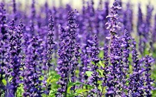 植物的藥用價值——探尋南澳健康花園