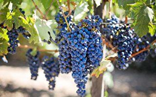 从世界第一到星际第一 乔治亚拟在火星种葡萄